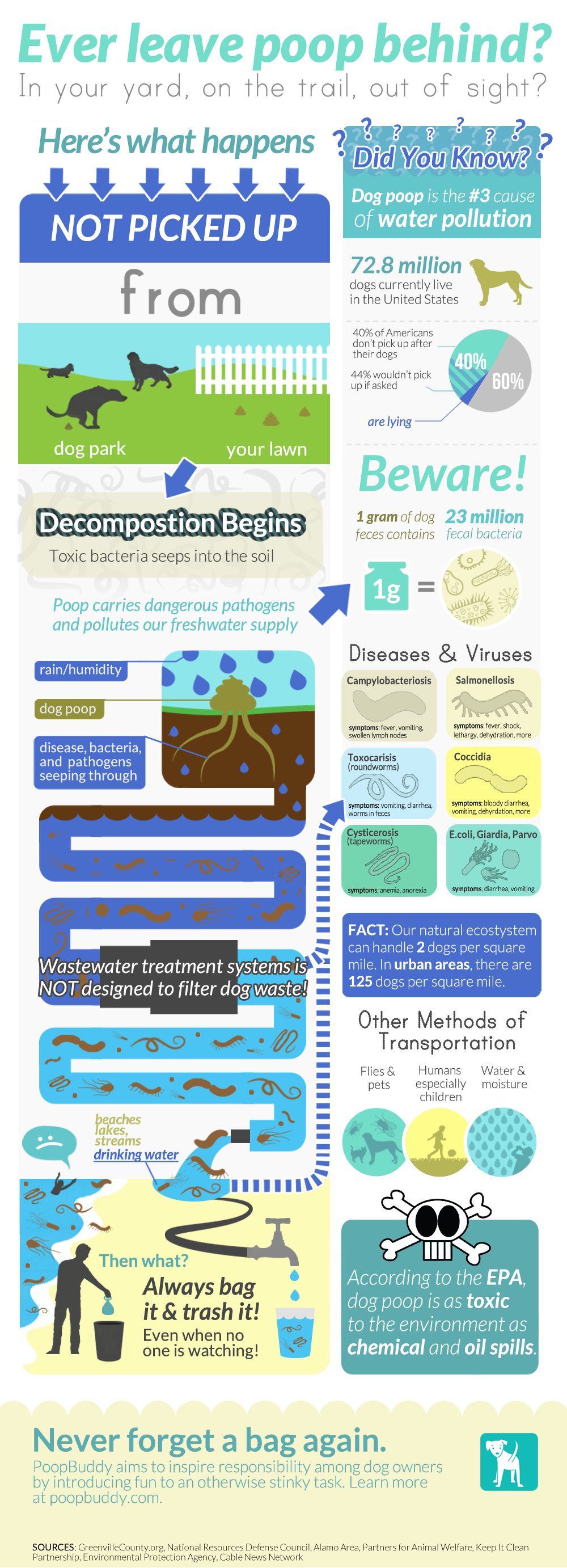 dog poop water pollution infographic